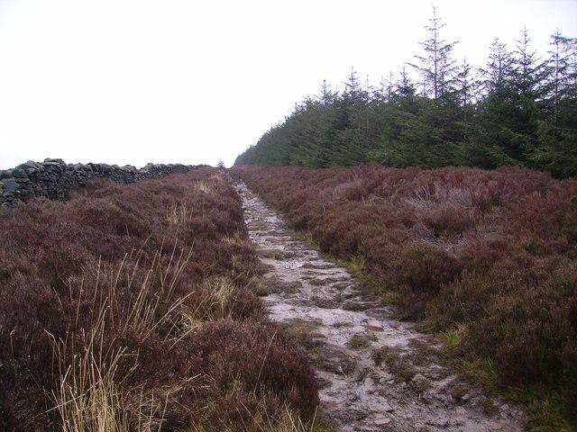 On Longridge Fell
