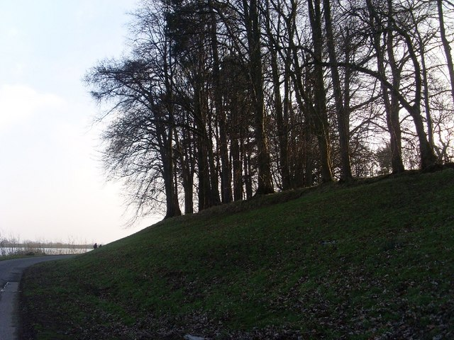 Trees atop hill by Craigmaddie Reservoir
