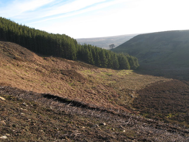 The north edge of Beldon End Plantation, and Beldon Cleugh