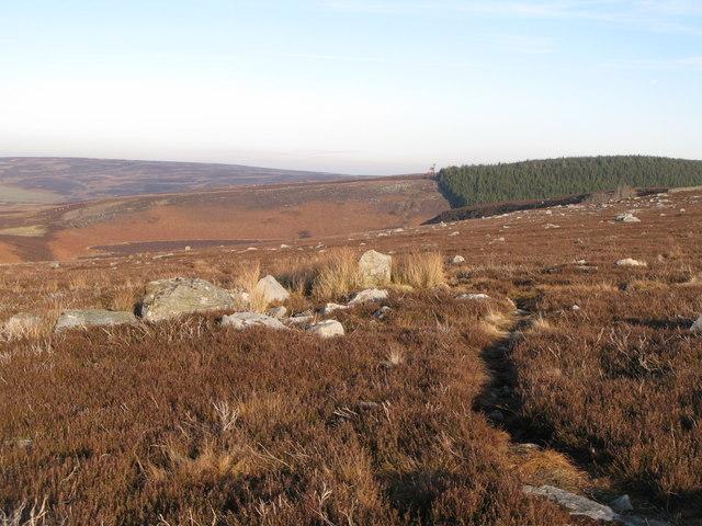 Path on Harwoodshield Fell
