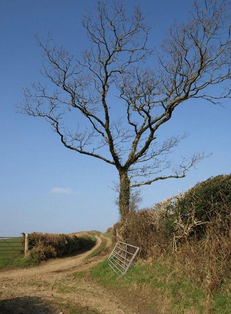 Tree by green lane