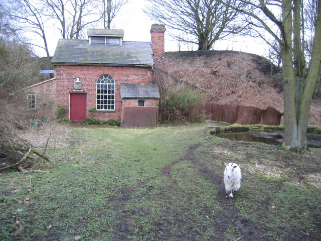 Disused building -and goat