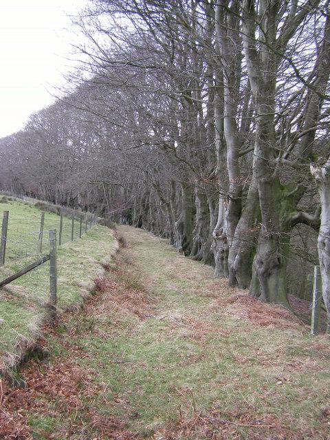 Footpath, Pedders Wood, Barnacre