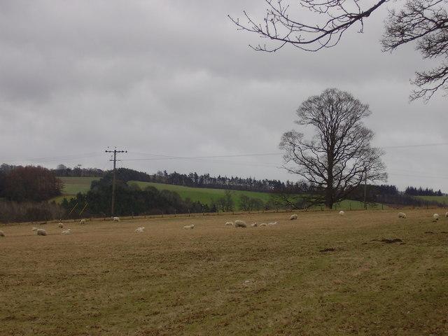 Sorrowlessfield, Scottish Borders