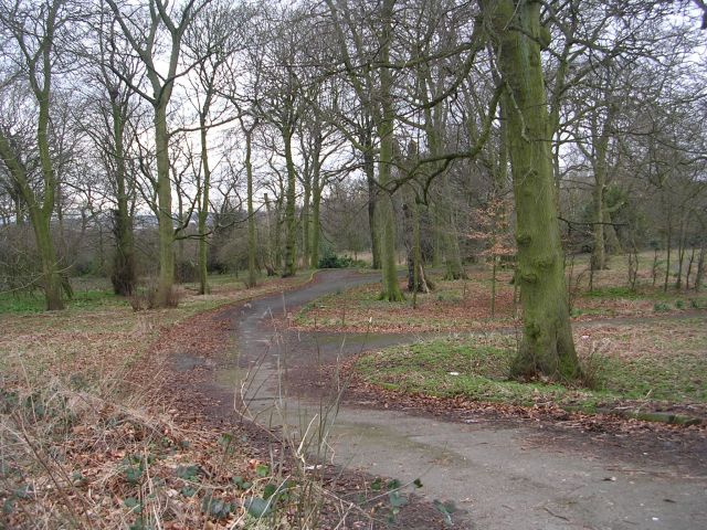 Bierley Hall Woods - Bierley Lane