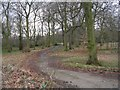 SE1729 : Bierley Hall Woods - Bierley Lane by Betty Longbottom