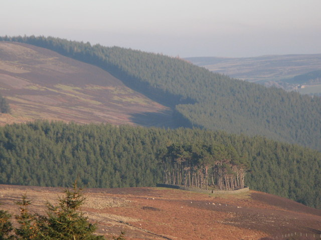 Plantation on a tumulus above the valley of Beldon Burn (3)