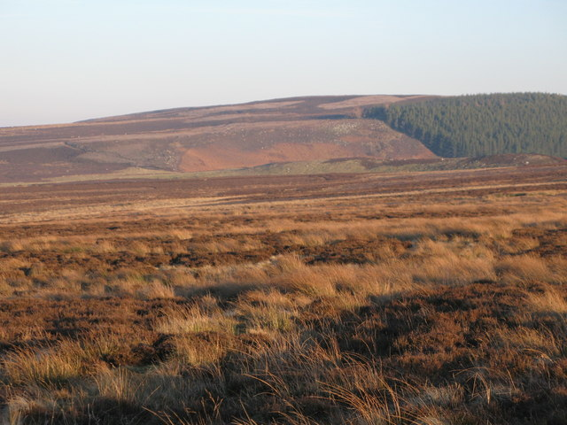 Moorland south of Harwood Shield (2)