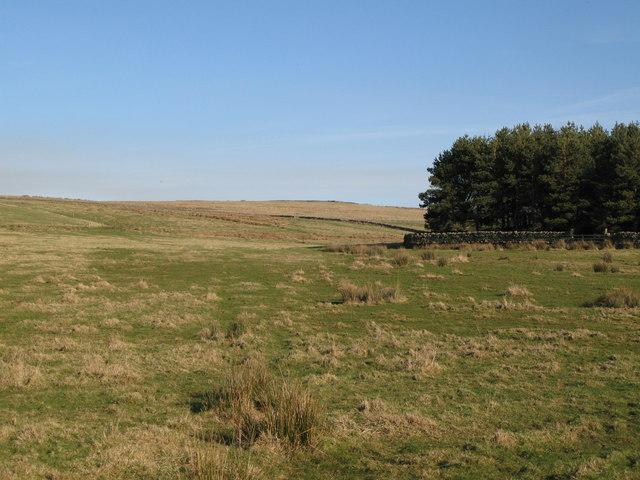 Pastures, moorland and plantation below Lough Hill