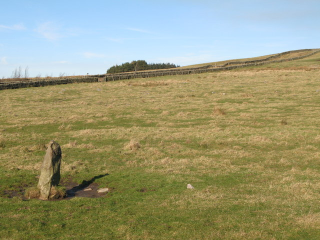 Standing stone in pasture near Moorhouse Gate