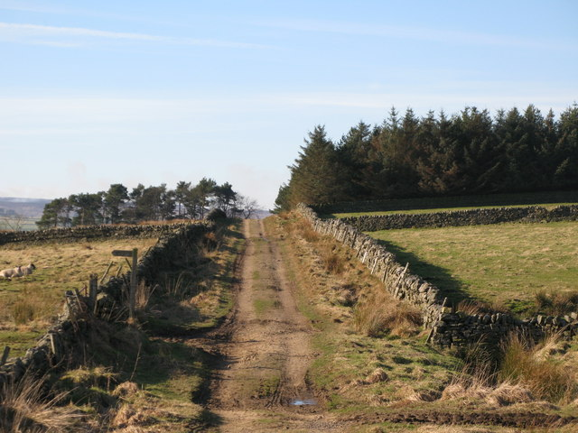 Chat's Lane above Moor House
