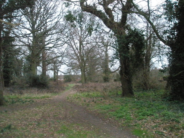 Battens Copse in February