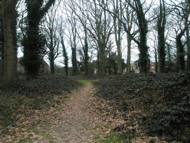 Path through Battens Copse