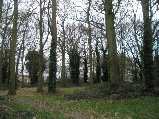Battens Copse from Stockheath Road