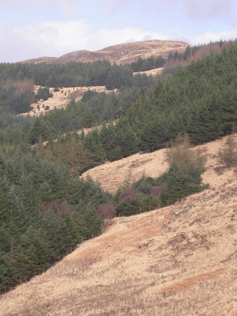 Forestry to the northeast of Loch Doire nam Mart