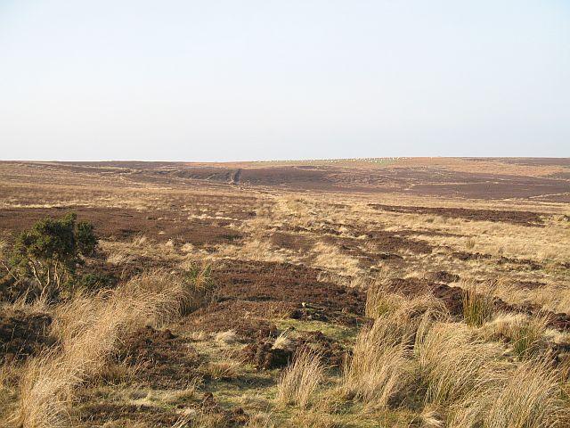 Sandyford Moor
