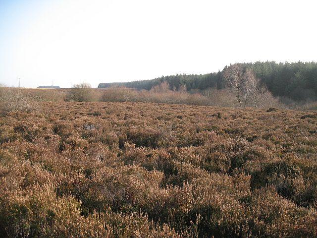 Roseborough Moor