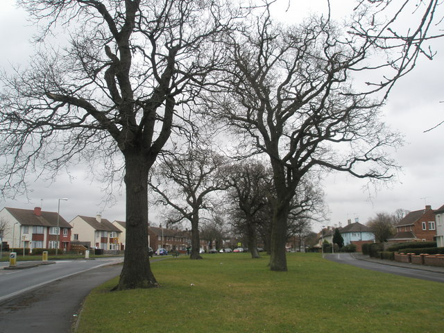 Mature trees in Purbrook Way