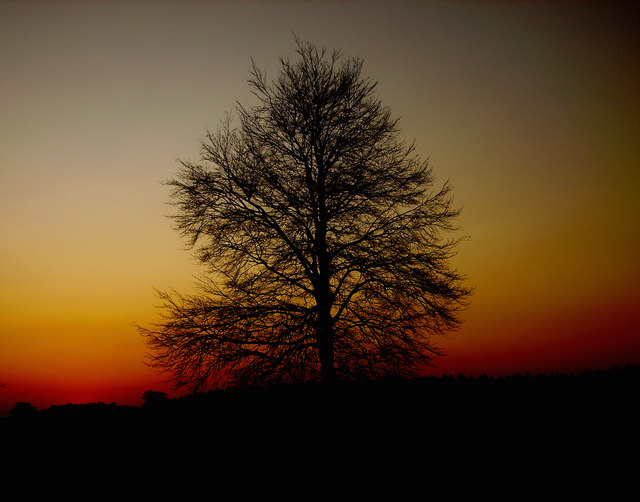 Amport - Tree at Sunset