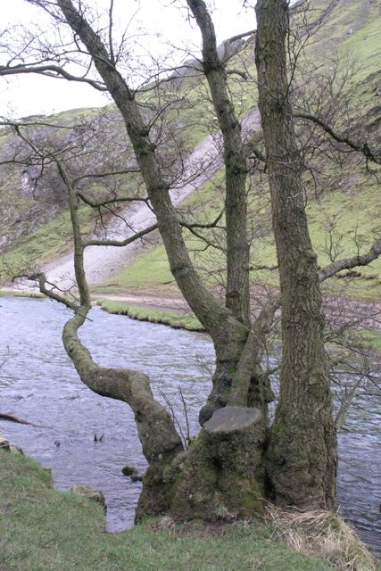 Tree and scree, Dovedale