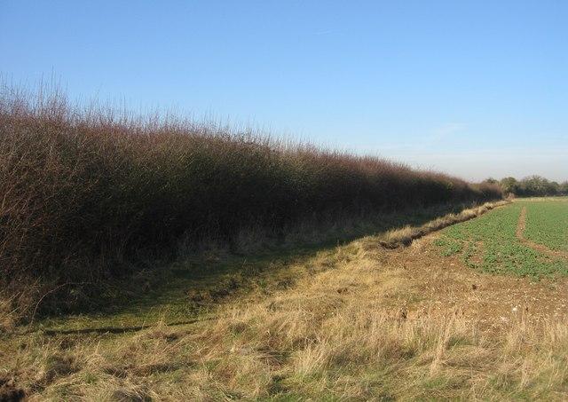Footpath & hedgerow