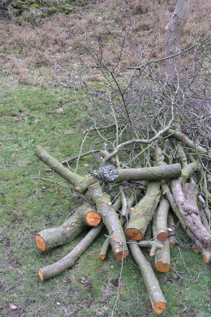 Wood pile, Dovedale