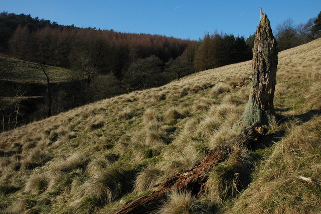 Tree stump in the Goyt Valley
