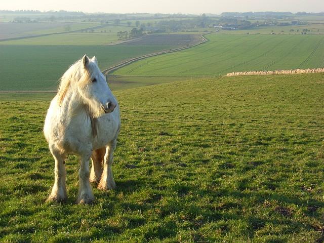 Horse on Uffcott Down