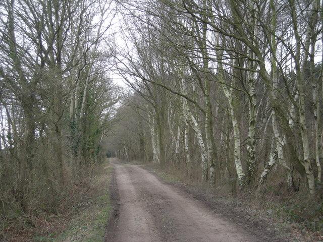 Silver Birches at Shawbury Heath
