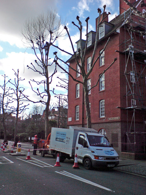 Tree Surgeons at Work, John Islip Street, SW1