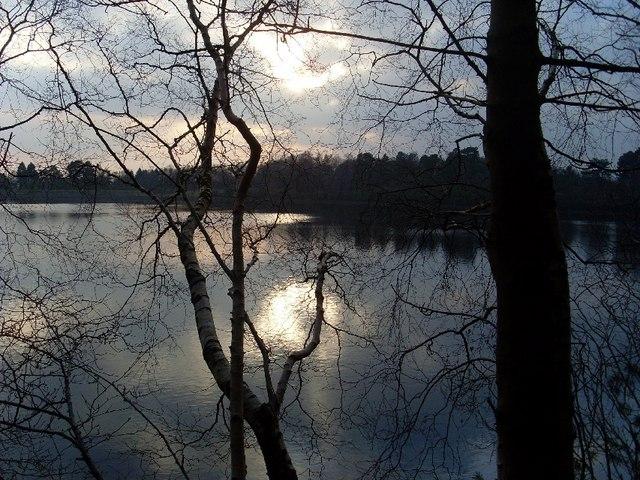 Tree overhangs Mugdock Reservoir