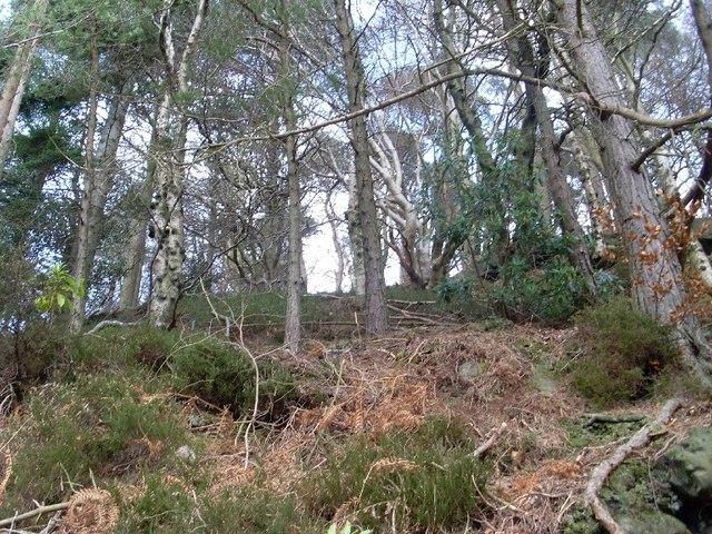 Woods north of Mugdock Reservoir