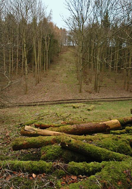 Low Hunsley Plantation