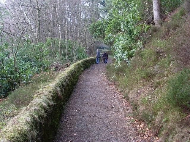 Woodland path north of Mugdock Reservoir