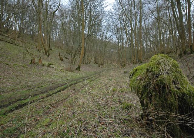 Low Hunsley Plantation - eastern end