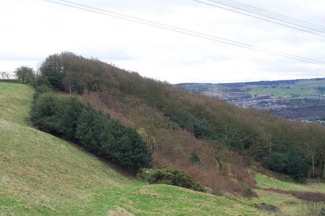 Elland Park Wood from Park Nook