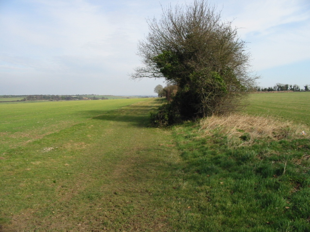 Field boundary on Sutton Down