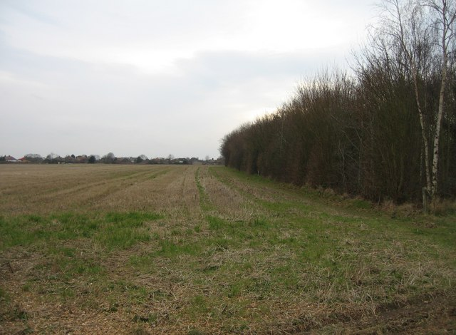 Woodland field boundary