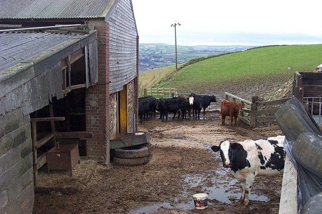 Farm Yard at Park Nook