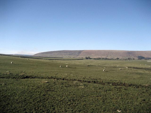 Large Pasture north of Gamble Hole Farm