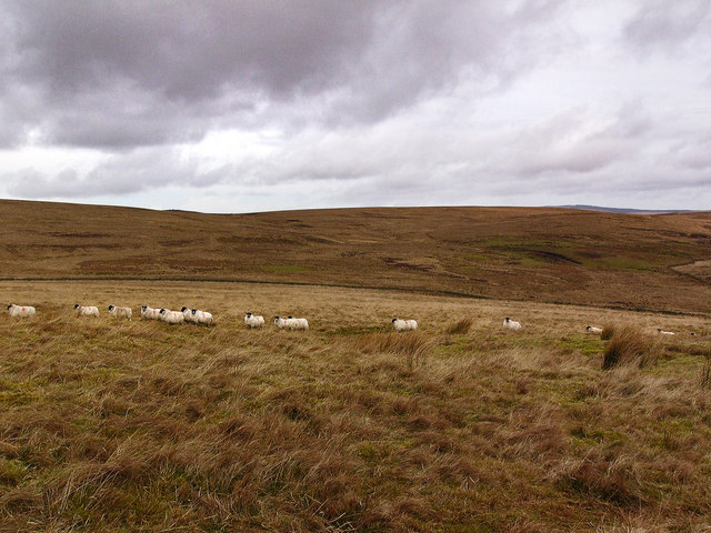 Moorland to the north of Auchmantle Fell