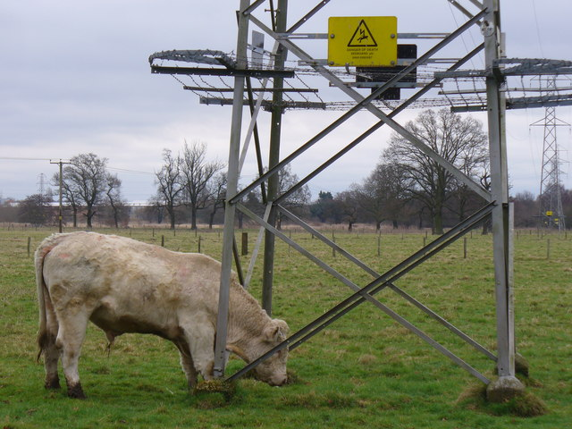 Irrita-bull