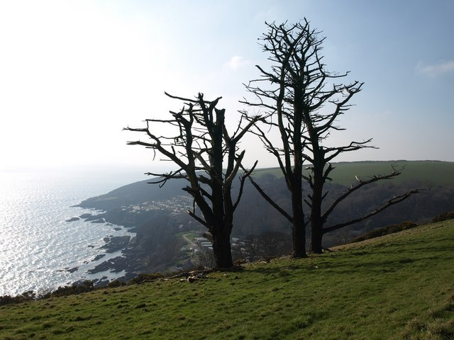 Dead trees above Stoke Beach Caravan Park