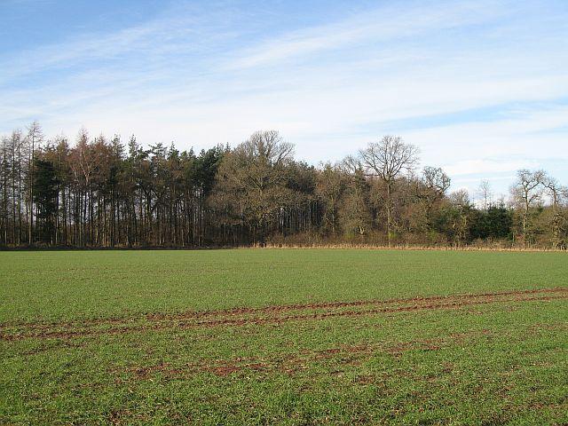 Gladsfield Wood