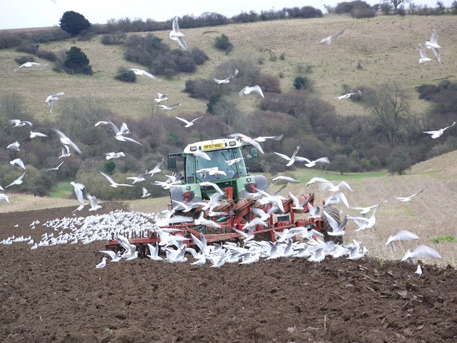 Tractor under attack, Faulston Farm