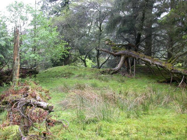 Fallen Tree - Glen Lonan