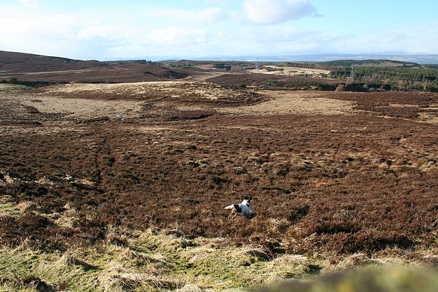 Looking nor'west from the fenced enclosure on Carn Mor