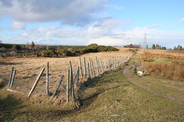 Sheep enclosure to the east of Rieareach Burn