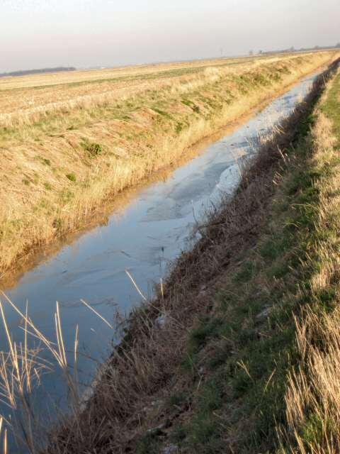 Drain near Carr Dyke