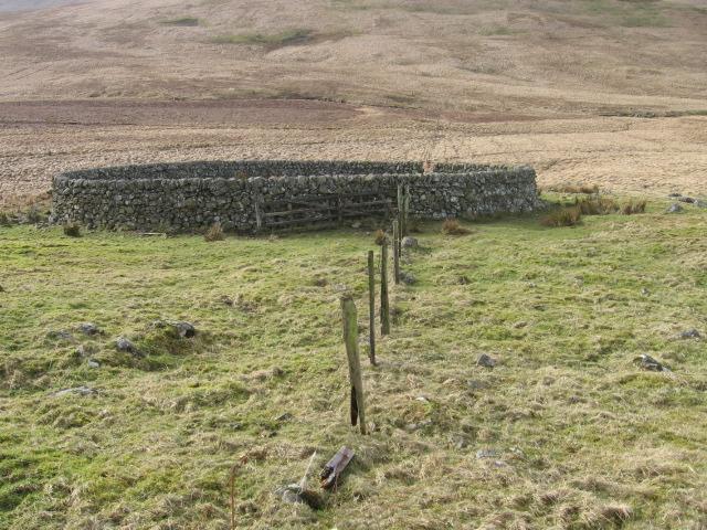 Sheepfold near Crook Burn